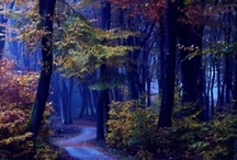 magical forests!!!