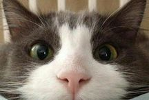 Cat Memes and Cute Kittys / Cats, cat memes, and anything related to our furry feline friends!