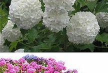 Cores e Flores