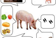 Zvieratá na farme