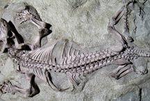 Dinosaur & Fossils