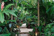 maison végétale