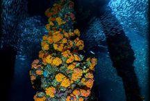 Aquatic Life 2 / Aquatic life