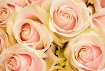 Soft pink loveliness of Sweet Avalanche / Inspiration board full of soft pink tones of Sweet Avalanche rose by Meijer Roses. From bridal bouquets to centerpieces, you'll find all the pastel inspiration you need!