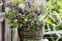 Beautiful Gardens and Flowers / by Aly
