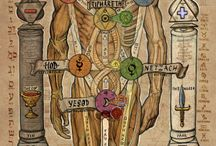 anatomy occultus