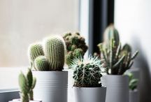 Green plants/Cactus