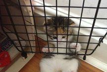 CATS - Katter