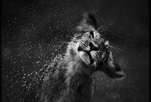 Amazing Black and White Pics / Fotografia em P&B B&W Photos