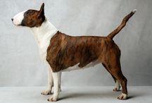 bull terrier / by Marie White