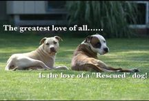 Who rescued who? Love you Chica