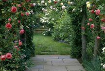 Álom kert♥