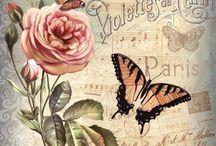 Favorit fjäril blomma