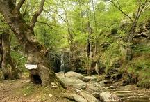 Thasso's Nature