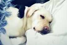 love labs especially Spencer
