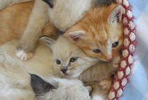 Katties