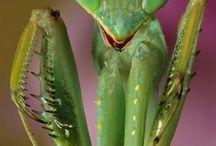 ☁ kool bugs ☁ / bugs!!!!!!!!!!