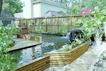 Gardening / Pond life / by Aunt Pitty Pat