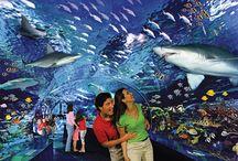 Ripley's Aquarium of the Smokies / www.RipleysAquariumOfTheSmokies.com