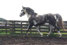 Muddy Horse Hall of Fame / It's that time of year again... who has the muddiest horse?