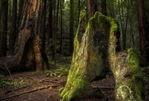 My love of Trees! / by Sherry Edwardson