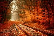 Autumn/Fall / The most beautiful time of the year