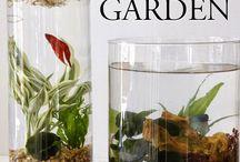 Gardening / Indoor garden