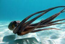 Sardinia Underwater