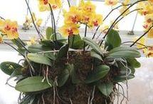 orquideas y matas