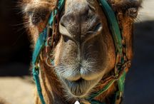 Morocco trip!