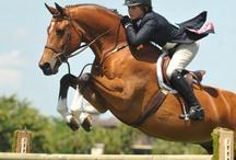 equestrienne / by Bayly Carmean