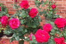 Postreky na ruže