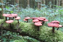 Mushrooms, Moss, and Lichens