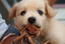 Cute!! :)