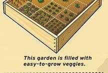 Herb and veggie advice