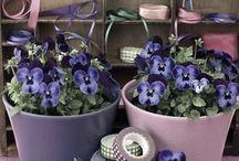 Flower pots / Flower pots