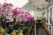 The Petrens orchid nursery