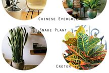 Green Therapy / plants | green living | interior | exterior