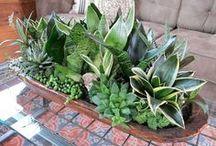 Decor withsucculentss