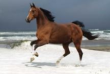 Horses / by Delaney Webb