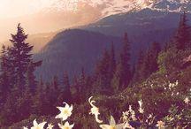 υπαιθρος με λουλουδια / ΛΟΥΛΟΥΔΙΑ ΣΤΗ ΦΥΣΗ