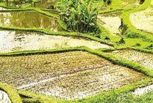Bali '17