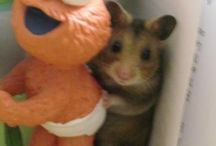 RIP Butters / I miss my hamster 2006-2008  / by Imani Rose
