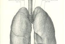 MAN &OBJECT /breathing