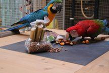 Greenparrotshop met Vogeljungle / foto's en allerlei van de greenparrotshop