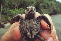 Turtles! / Just turtles. All kinds!  I love them!
