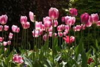Jardinage / Gardening / Jardin potager, jardin fleuri, balcon fleuri, légumes, fleurs, plantes d'intérieur, entretien du jardin