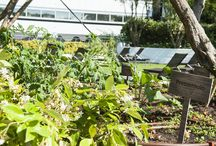 Our herbs & vegetable garden / From our garden to your plate, it can't get any fresher than this