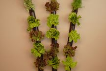 Hydroponic Indoor Wall Garden