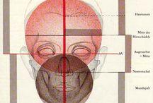 анатомия пропорции человека